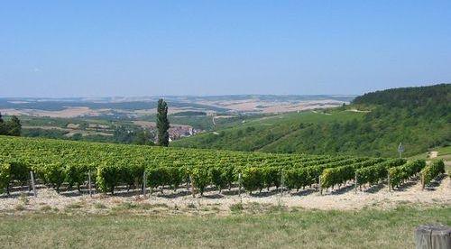 Irancy vineyards